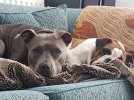 blue and bess couch.jpg